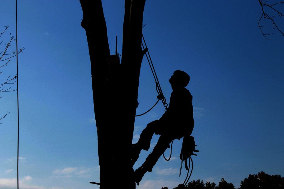 Travaux d'élagage et d'abattage d'arbres