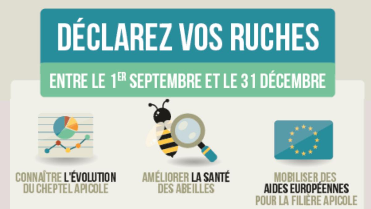 Déclarez vos ruches jusqu'au 31 décembre 2020