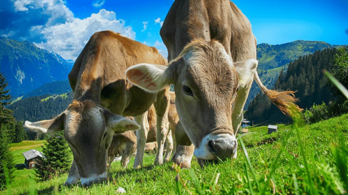 Plan alimentaire territorial : manger mieux, de saison et local
